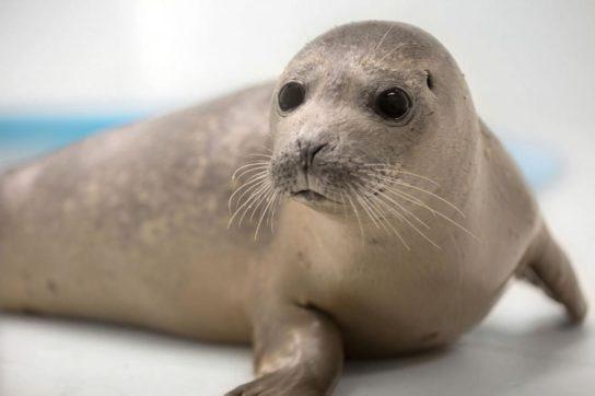 фото тюленя