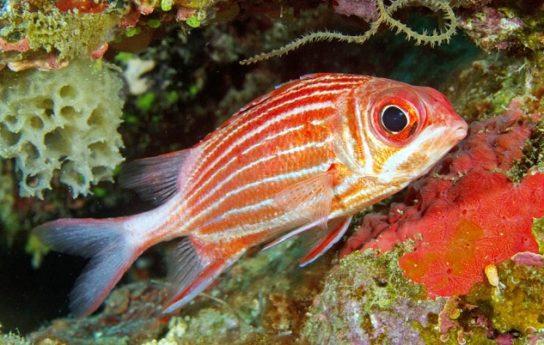 чем питаются рыбы - фото 3