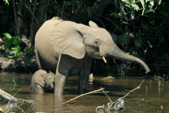 зачем слону хобот - картинка 8
