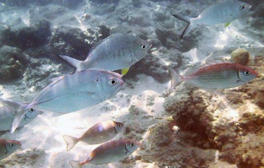 чем питаются рыбы - фото 5