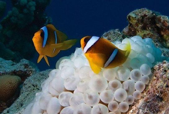 чем питаются рыбы - фото 6