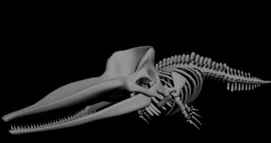 скелет кашалота - фото