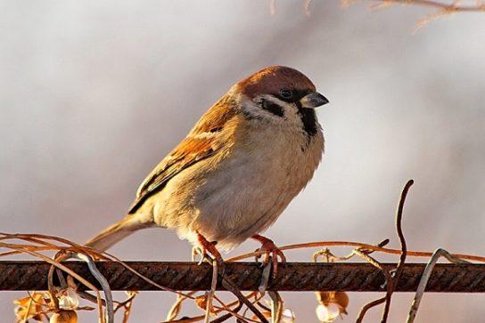 чем питаются птицы - фото 12