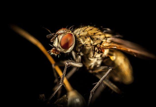 где обитает муха цеце