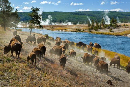 """Национальный парк """"Йеллоустоун"""""""