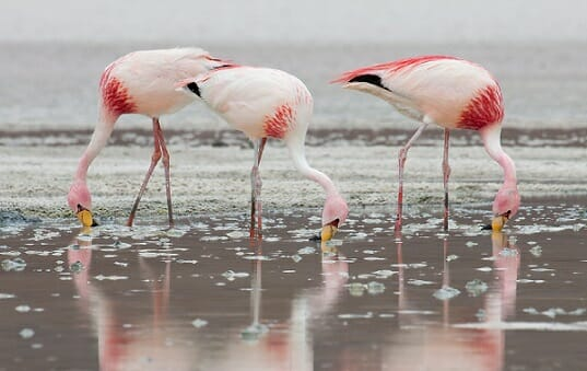 питание фламинго