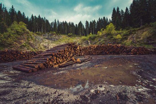 последствия обезлесения
