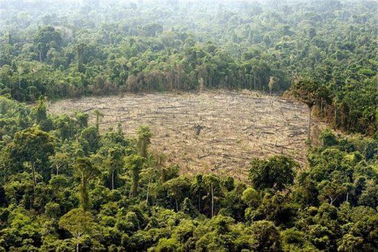 Фото обезлесения в Амазонке