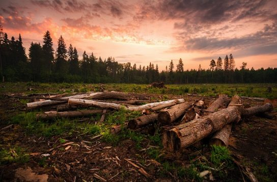 причины обезлесения