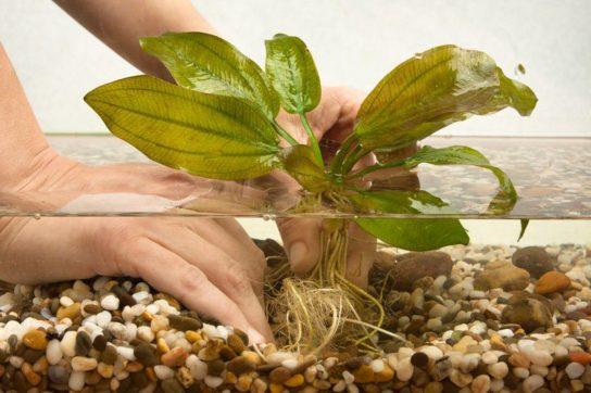 содержание аквариумных растений