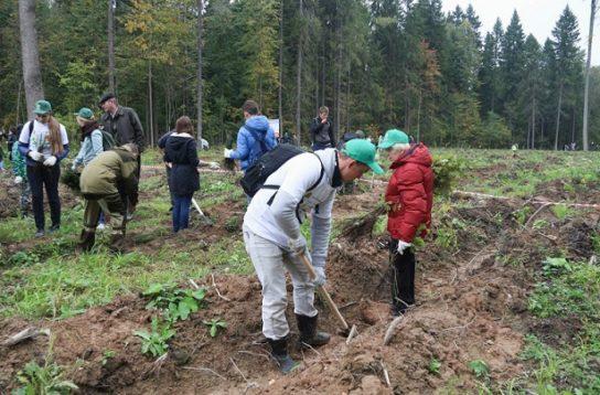 Борьба с обезлесением