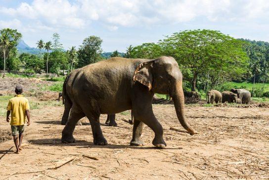 зачем слону хобот - картинка 1