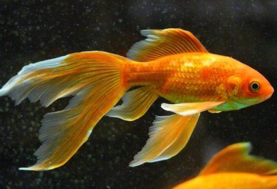 чем питаются рыбы - фото 8