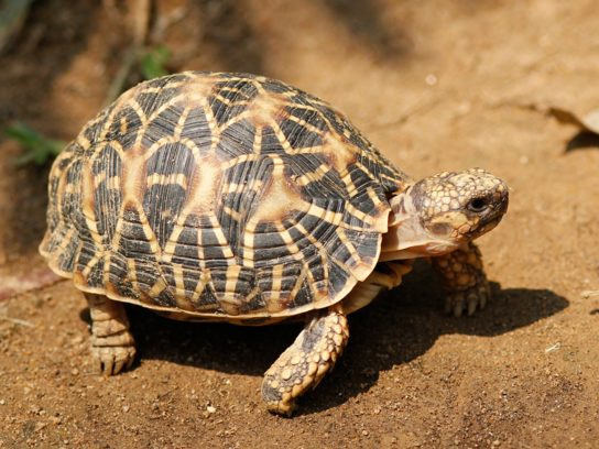 уход за сухопутными черепахами
