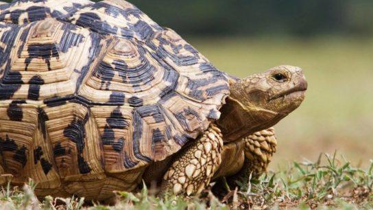 чем может заболеть сухопутная черепаха