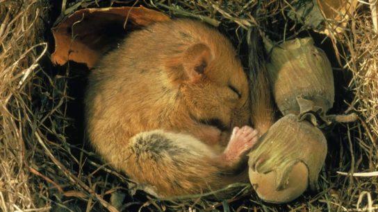 Какие лесные животные впадают спячку - картинка 1