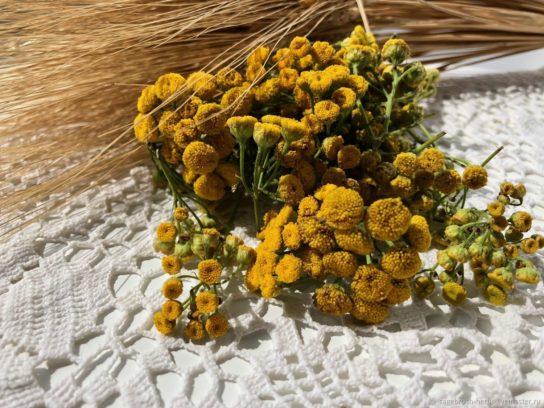 растение пижма - фото 7