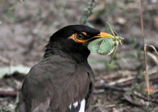 чем питаются птицы - фото 1