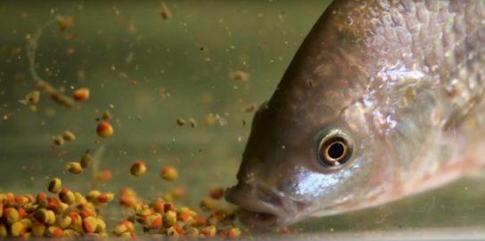 чем питаются рыбы - фото 1