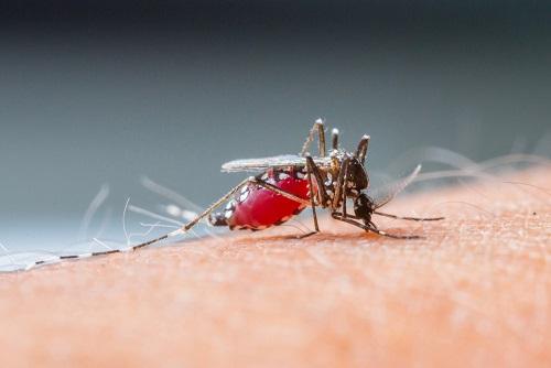 Как комар кусает