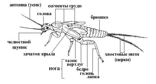 строение комаров