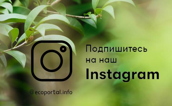 Экопортал в Инстаграме