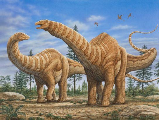размножение апатозавров